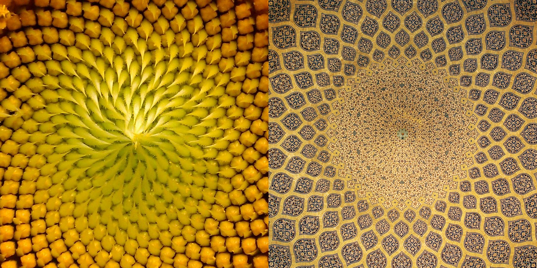 Sunflower / Arabesque architecture