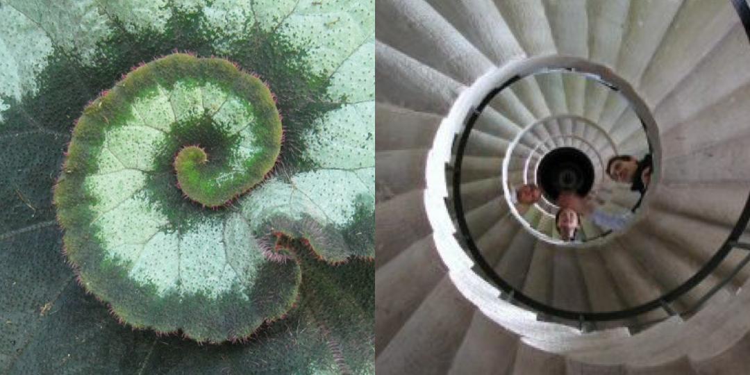 Spiral Begonia / Italian stairways